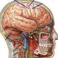 بروشور سیستم عصبی.خودکار آبی دات کام